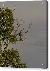 Heron Greets The Day Acrylic Print