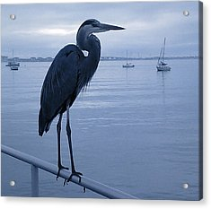 Heron In Blue Acrylic Print
