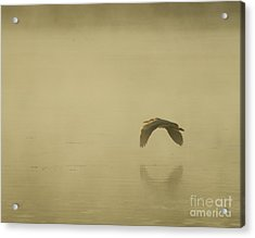 Acrylic Print featuring the photograph Heron In Flight  by Christopher Mace