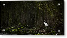 Heron In Grass Acrylic Print by Bradley R Youngberg