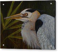 Heron In Hiding Acrylic Print