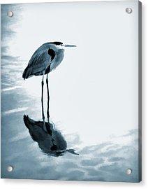 Heron In The Shallows Acrylic Print by Carol Leigh