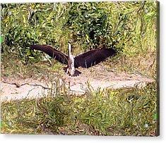 Heron Landing Acrylic Print by Carolyn Reinhart