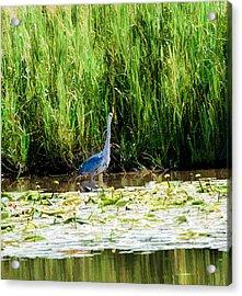 Acrylic Print featuring the photograph Heron by Leif Sohlman