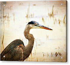 Heron Acrylic Print by Marty Koch