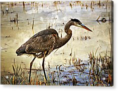 Heron On A Cloudy Day Acrylic Print by Marty Koch