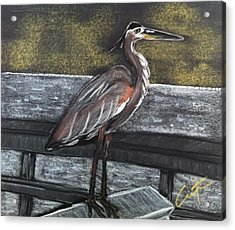 Heron On Hunting Island Fishing Dock Acrylic Print