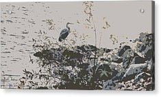 Silent Lake Acrylic Print