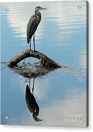 Acrylic Print featuring the photograph Heron Reflection by Kenny Glotfelty
