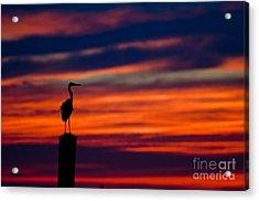 Heron Sunset Silhouette Acrylic Print
