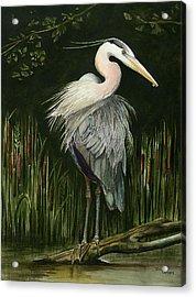 Heron Acrylic Print by Terri  Meyer
