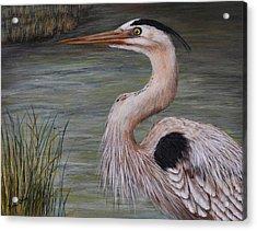 Heron Watching  Acrylic Print