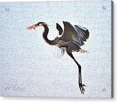 Acrylic Print featuring the photograph Heron With Catch by Ludwig Keck