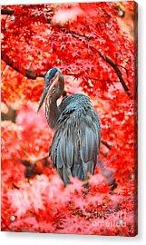 Heron Wonderland Acrylic Print by Douglas Barnard