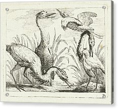 Herons At A Puddle, Peter Casteels IIi Acrylic Print