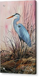 Herons Evening Shore Acrylic Print by James Williamson