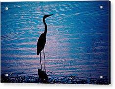 Herons Moment Acrylic Print