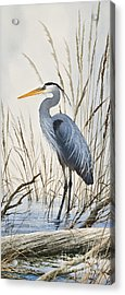 Herons Natural World Acrylic Print by James Williamson