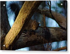 Acrylic Print featuring the photograph He's Watching You by Daniel Woodrum