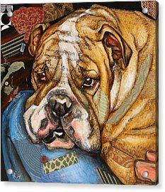 Hey Bulldog Acrylic Print