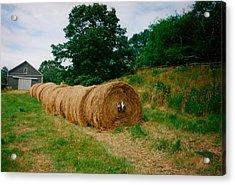 Hey- Hay Roll Acrylic Print