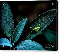 Acrylic Print featuring the photograph Hey  I'm Trying To Hide by Debra Fedchin