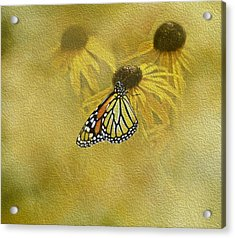 Hey Susan There Is That Butterfly Again Acrylic Print by Diane Schuster