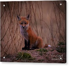 Hey There Acrylic Print by Steven Reed