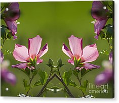 Hibiscus 07 Mirror Image Acrylic Print by Thomas Woolworth