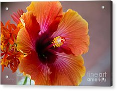 Hibiscus 3 Acrylic Print by Sally Simon