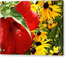 Hibiscus And Black Eyed Susans Acrylic Print by Deborah Fay