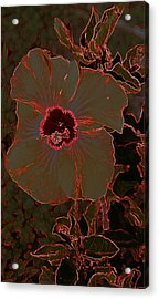 Hibiscus At Play  Acrylic Print