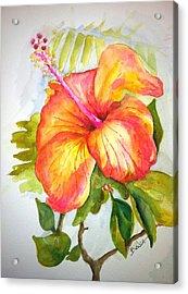 Hibiscus Acrylic Print by Bianca Romani