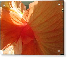 Hibiscus Butterfly Acrylic Print