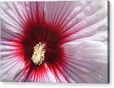 Hibiscus-callaway Gardens Acrylic Print by Mountains to the Sea Photo