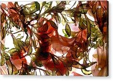 Hibiscus Coleus Array Acrylic Print