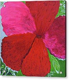 Hibiscus Explosion Acrylic Print by Angela Annas