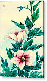 Hibiscus Flowers 1870 Acrylic Print by Padre Art