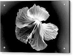 Hibiscus In Black And White Acrylic Print
