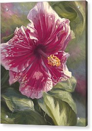 Hibiscus In Bloom Acrylic Print by Lucie Bilodeau