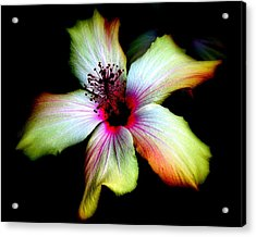 Acrylic Print featuring the photograph Hibiscus by Jodie Marie Anne Richardson Traugott          aka jm-ART