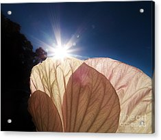 Hibiscus Landscape 2 Acrylic Print by Judy Via-Wolff
