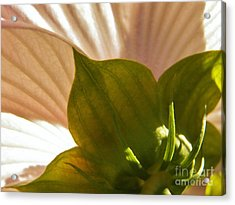 Hibiscus Landscape 3 Acrylic Print by Judy Via-Wolff