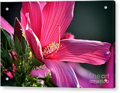 Acrylic Print featuring the photograph Hibiscus Morning Bright by Nava Thompson