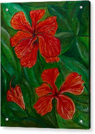 Hibiscus Acrylic Print by Peter Turner