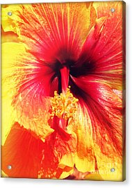 Hibiscus Photography Light Leaks Acrylic Print by Chris Andruskiewicz
