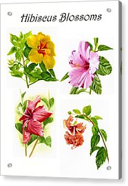 Hibiscus Poster With Script Acrylic Print by Sharon Freeman