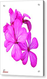 Hibiscus Set One Acrylic Print by Tina M Wenger