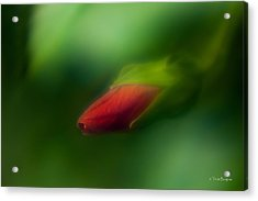 Acrylic Print featuring the photograph Hibiscus Softly 1 by Travis Burgess