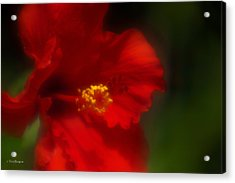 Acrylic Print featuring the photograph Hibiscus Softly 2 by Travis Burgess